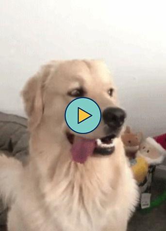 cachorrinho bonito com a lingua de fora….