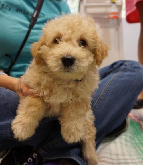 find dogs for adoption  search local dog rescue and