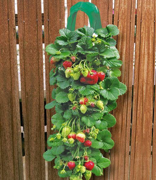 2 Erdbeer Pflanzbeutel 9 Hange Er Erdbeeren Bei Baldur Garten Pflanzen Erdbeeren Balkonkasten