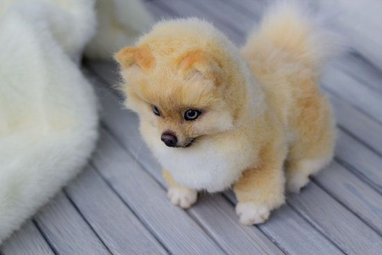 Pomeranian By Mirafox In 2020 Spitz Puppy Puppies Dogs And Puppies