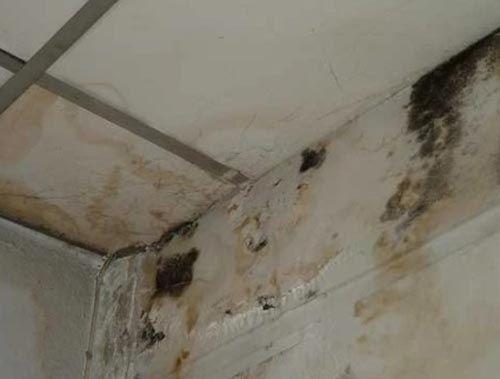 ล างคราบดำ บนกำแพงผน งบ าน รอยหนาๆก เช ดออกได ง ายๆ 108 อาช พพารวย เคล ดล บในช ว ตประจำว น เฟอร น เจอร