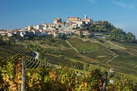 Premium Photographic Print: View over vineyards towards medieval town of La Morra, Piedmont, Italy by Brian Jannsen : 36x24in