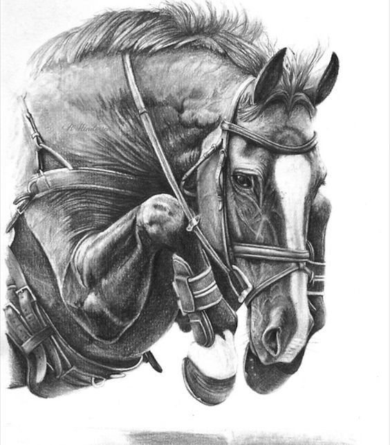 Art The Details Are Amazing Horse Drawing Dessin Cheval