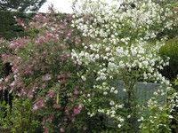 Arbustes au jardin, (c) Jean-Claude Moiron, lauréat du concours Jardiner Autrement 2011