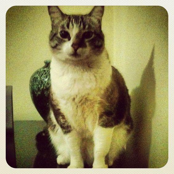 Acabou de perder a bolinha. Tá #chatiada. #cute #cat by agapetata