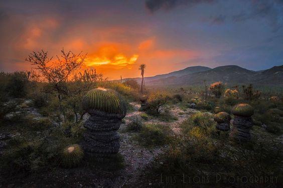 Biznagas Sunset lll  Landscapes photo by LuisLyons http://rarme.com/?F9gZi