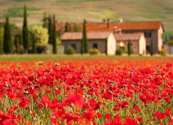 Maybe Tuscany in 10 years!