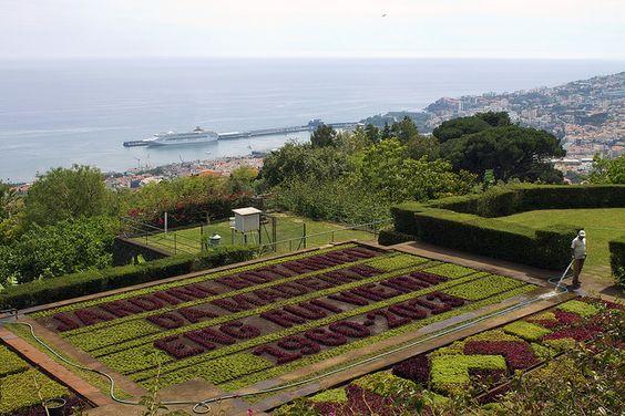 Todos os tamanhos   Jardim Botânico da Madeira   Flickr – Compartilhamento de fotos!