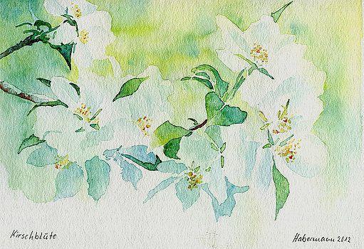 Thomas Habermann - Kirschblute