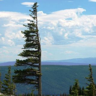 upjc explore the medicine bow national forest.