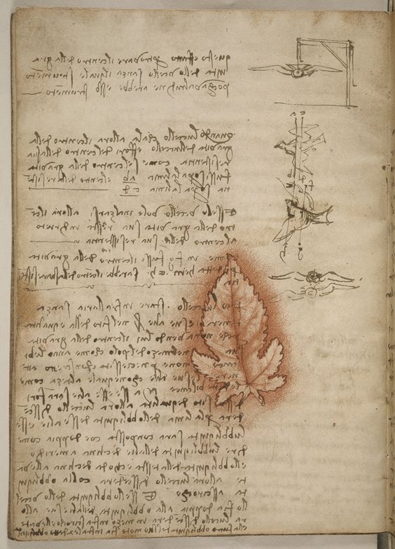 In the codex, Leonardo notes for the first time that the center of gravity of a flying bird does not coincide with its center of pressure.  magnified image