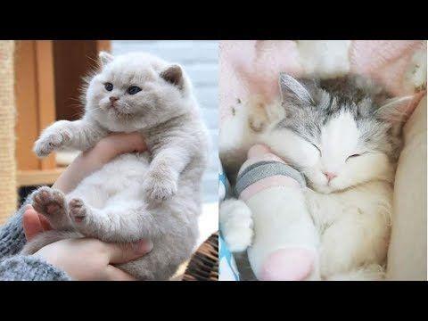 Cute Kitten Videos Compilation 4 Animal Loves Youtube Cute Kitten Gif Kittens Cutest Kitten Gif