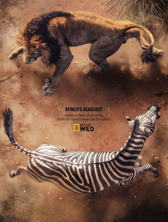 Africa's Deadliest Campaign by Rocket Yard – Inspiration Grid | Design Inspiration