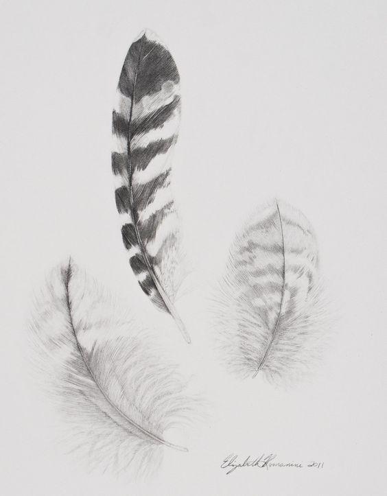 Hawk Feathers.
