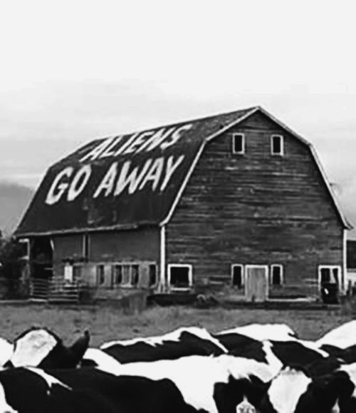"""I wonder where/when this was taken, but Google image search sheds little light. I spent a childhood summer in the late 1970s on a relative's farm in rural Illinois (U.S. Midwest). There had been a spate of alleged cow mutilations in the area, locally blamed on either UFOs or """"devil worshipers"""" (*eyeroll*). It all sounds ridiculous to me now, but I was scared shitless."""