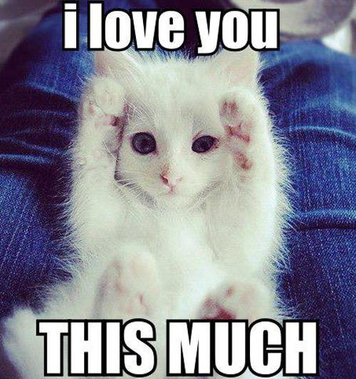 16 Super Sweet Memes On Animals Celebrating Valentine S Day Funny Cat Memes Cute Baby Animals Cute Funny Animals