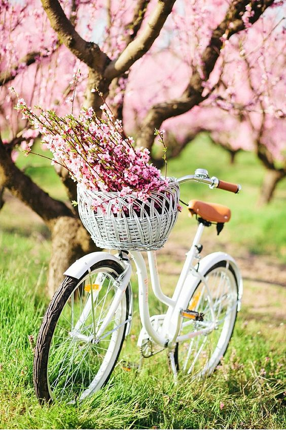 White bicycle with pink flowers - lovely!