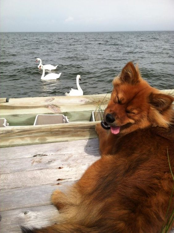 Derp likes swans