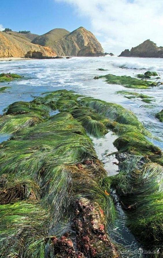Coastline - Pfeiffer State Beach VIII