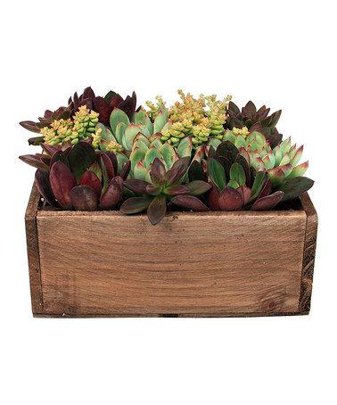 Live Plants & Square Succulent Garden Box #zulily #zulilyfinds