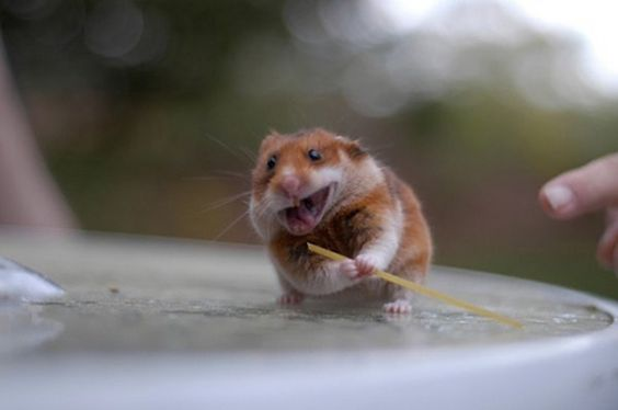 A Really Happy Looking Hamster
