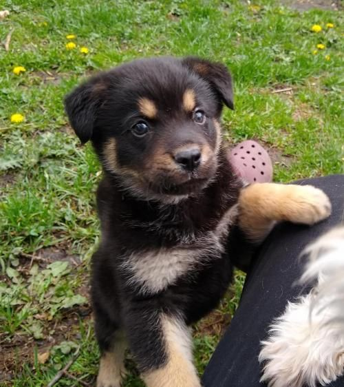 This Lonely Pup Needs A Home Rottweiler Shepherd Mixed In Minneapolis Mn In 2020 Pets Pet Adoption Dog Adoption