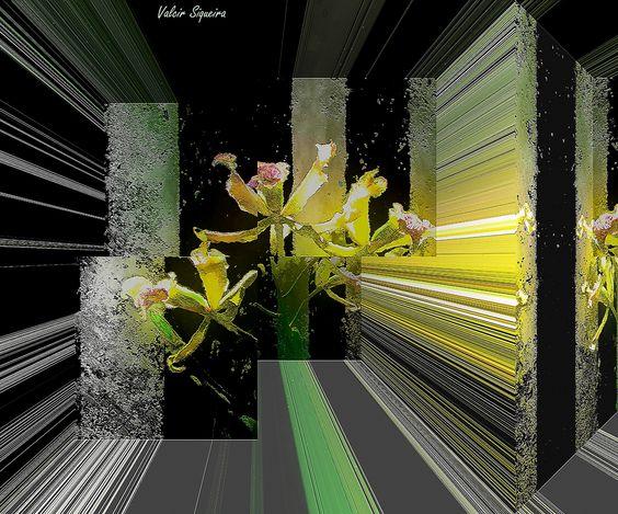 https://flic.kr/p/tZLMME | Espaço tridimensional com orquídeas