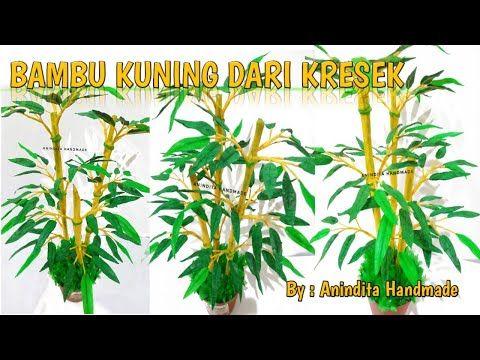 Bambu Kuning Dari Kresek Tanaman Bambu Dari Kresek How To Make
