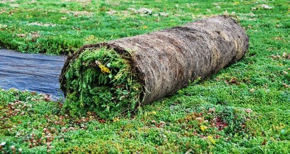 Vegetationsmatten - Dach- oder bodendeckende Begrünung - Sempergreen