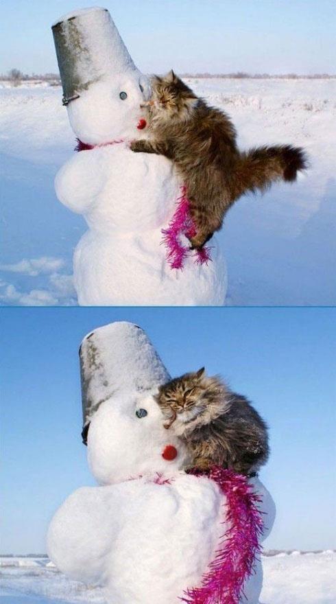Cette image vient me chercher... C'est comme si le chat a tellement besoin d'être dans les bras de quelqu'un... Que même le froid de ce bonhomme de neige est accueillant! xx