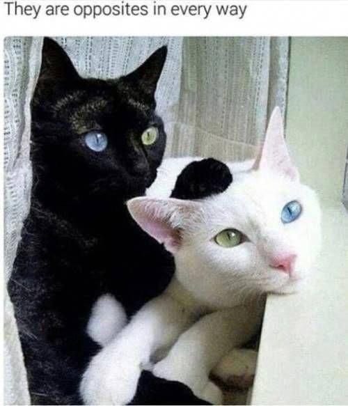 Lustige Katze Meme Des Tages 35 Bilder Ep17 Bilder Katze