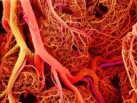 Doctors can now 3D-print blood vessels - Organ replication took a leap at a Boston hospital, as doctors finally nailed the process of artificial vascularization with the use of advances in 3D bio printing together with biomaterials in order to create the first synthetic blood vessels. | EUTimes.net