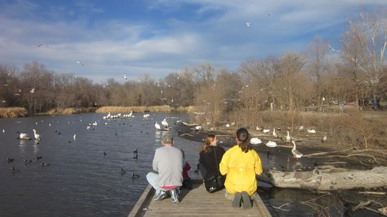 Bird watching at White Rock Lake, Dallas (photo by Emily Valentin)