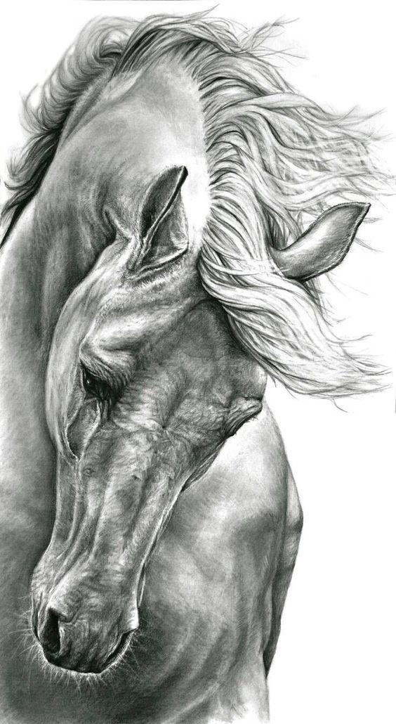 amour des animaux  - Page 3 Aa6372062f313ce3bc3d83dc98bc7a7d