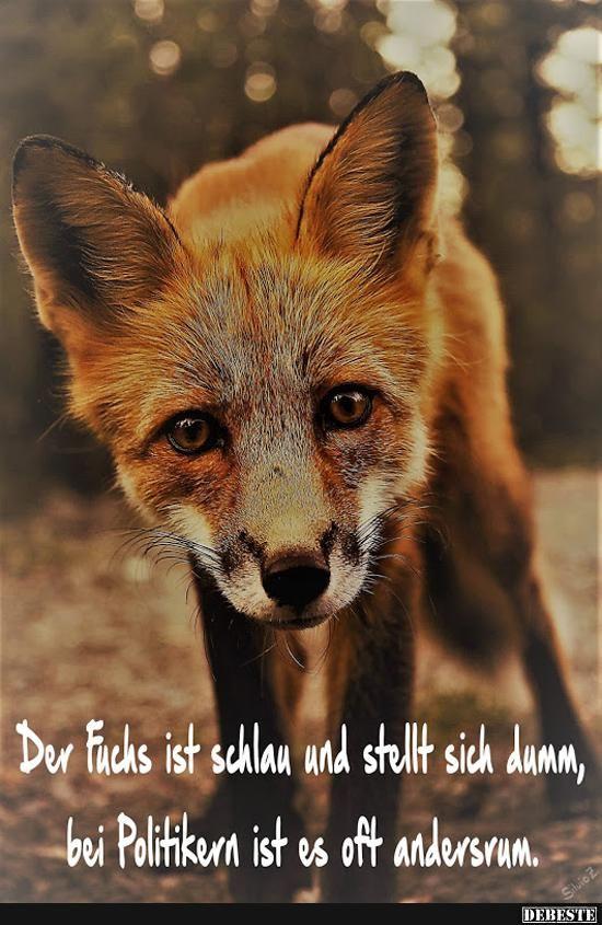 Der Fuchs ist schlau und stellt sich dumm, bei Politikern ist es oft.. | Lustige Bilder, Sprüche