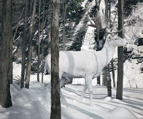 white animals | Tumblr