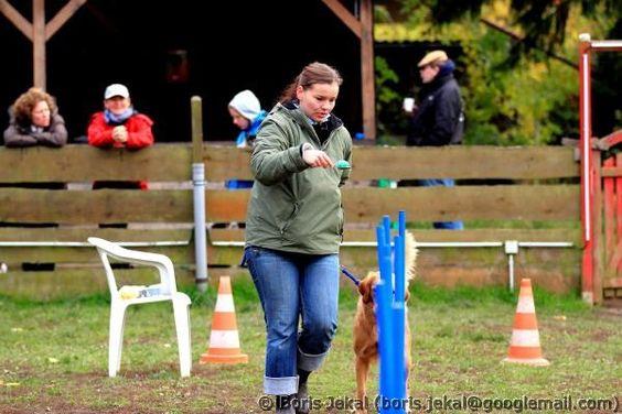 Hundeolympiade 27.10.2012 - Eierlauf