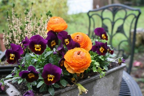 jardini re de printemps jardini res fleuries pinterest. Black Bedroom Furniture Sets. Home Design Ideas