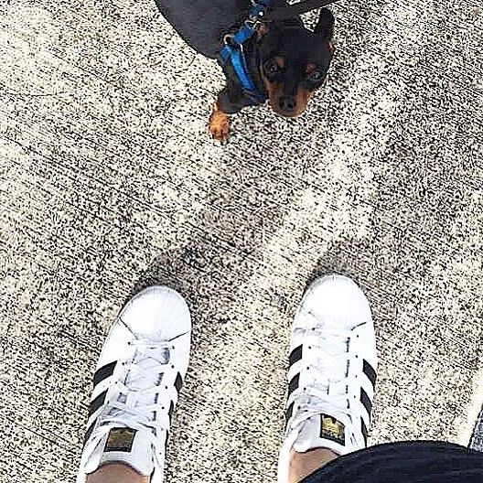 colateral aprender Desfavorable  Wussten Sie schon ☝️ Der Vater und Gründer der Firma Adidas ist Adi Dassler  und ... - #adidas #dassler #firma #grunder #schon #vater #wussten -  #TopWohnkulturSu…