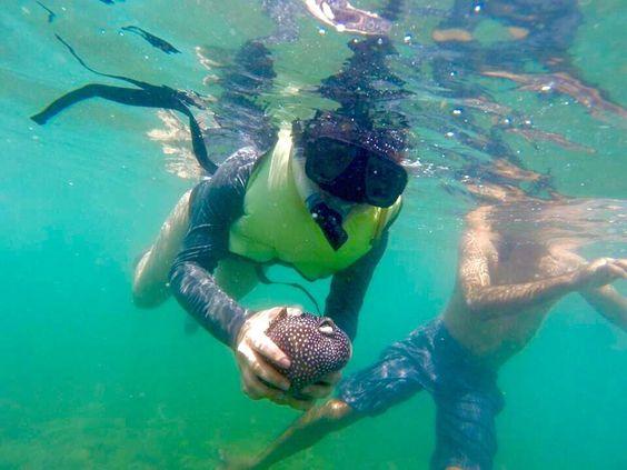 Blowfish // Kayak & Snorkeling Costa Rica