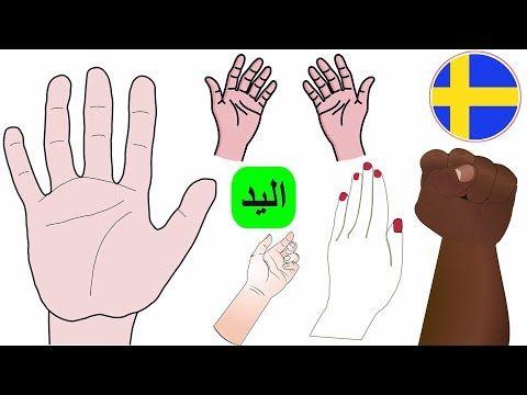 اليد بالسويدي اجزاء جسم الانسان السويدية اسماء اصابع اليد تعلم اللغة السويدية للاطفال Youtube Peace Gesture Peace Okay Gesture