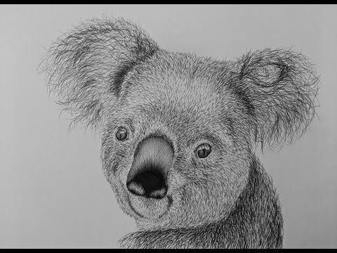 How To Draw A Koala Bear Step By Step Youtube Koala Drawing Bear Drawing Koala Illustration