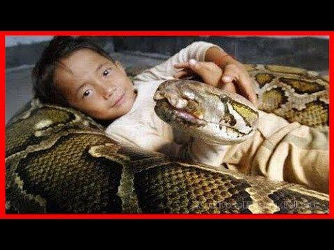 Más asombroso Niños jugando con una serpiente cobra
