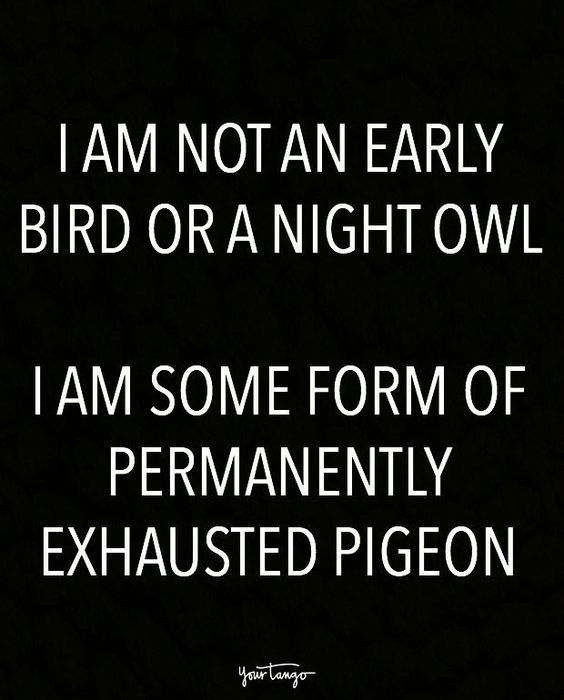 Absolutely Hilarious Funny Quotes For You To Laugh All Day Long 18 Pics Awed Owl Bed Quotes Funny Short Funny Quotes Funny Quotes