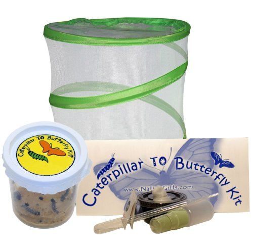 Live Butterfly Kit: SHIPPED WITH 5 Painted Lady Caterpillars Now
