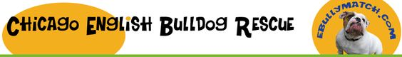 Chicago English Bulldog Rescue