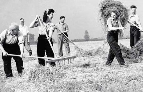 These were the women who took over the agricultural jobs in the UK during WWI and WWII– a cow-milking answer to Rosie the Riveter. They were generally young girls who came in from the cities, rolled up their sleeves, and set about serving their country by making sure the  while the men were away at war. They plowed fields, tended crops.