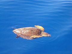 sea creatures madeira - Google Search