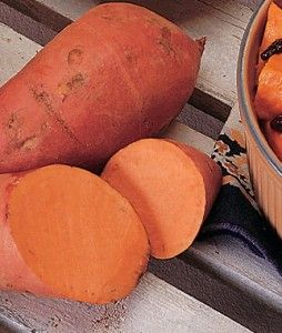 Sweet Potato Georgia Jet   Garden Seeds and Plants