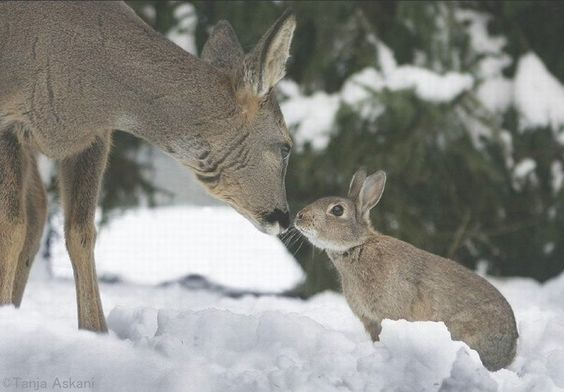 Yes there is a real Bambi and Thumper: